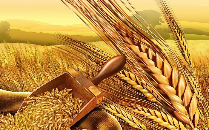 PSD_Food_illustrations_3118_wheat_and_wheatear